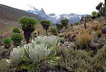 6 Days Mount Kenya Climbing Safari up Sirimon, out Chogoria Route - Mountain Kenya Climbing Safari